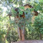 Tree House-Midigama, Midigama East