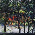 241, River View, Kandy