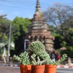 See You Soon, Chiang Mai, Chiang Mai