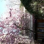 Affittacamere Casa Corsi, Florence
