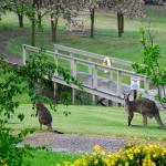 Hotellikuvia: Buttercup Cottage, Merrijig