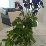 Appartamento Iris, Monopoli