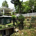 Shades of Green Homestay, Kandy