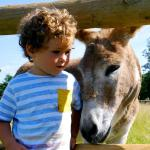 Valley Farm Glamping, Oxford