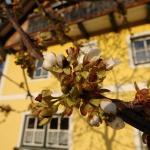 Фотографии отеля: Meissnitzerhof, Sankt Margarethen im Lungau