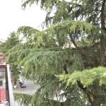 Apartment Natia, Batumi