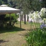 Piccola Volpe, Velletri