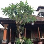 Gandra Guest House, Ubud
