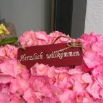 Fotografie hotelů: Alpina Appartements, Schröcken