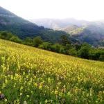 Hotelbilleder: Odmor Guest House, Tserovo