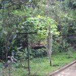 Forest Villa,  Kandy