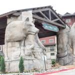 Great Wolf Lodge Grapevine,  Grapevine