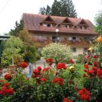 Hotellikuvia: Gasthof Zur schönen Aussicht, Wies