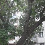 Apartments on 1-ya Begovaya 5,  Saratov