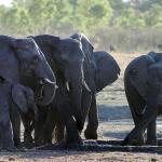Gwango Elephant Lodge,  Dete