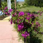 Hotel Pictures: Villa Curti, Kavajë