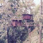 The Tree House, Ginigathena