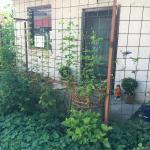 B&B Garden house, Novi Sad