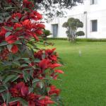 Fiore dell'Etna, Santa Venerina