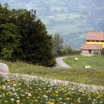 Green Park Monastero, Rustigazzo