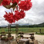 Agriturismo San Floreano, Buia