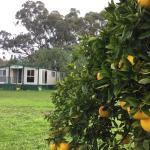 Fotos del hotel: Balcraggon Accommodation, Stockinbingal