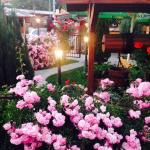 Hotellikuvia: Elit Guest House, Batak