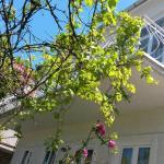 Guest House Miranda, Batumi