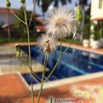 Hotel Pictures: Casa quinta El Bambú, Villavicencio