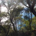 La Nomade, Sanary-sur-Mer