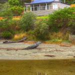 Foto Hotel: Bruny Beachfront Eco Lodge, Adventure Bay
