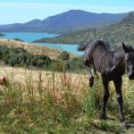Hotel Pictures: Finca Ranchiles, Montecorto
