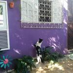 Hostel Margo, Natal