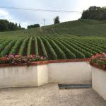 Hotel Pictures: La Loge Du Vigneron, Vauciennes