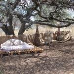 Kaya Inkuni Game Lodge,  Moedwil