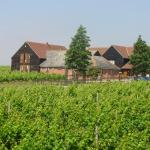 Mersea Island Vineyard, East Mersea