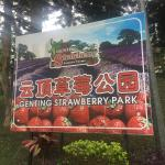 Genting Highlands Strawberry Home Vacation,  Genting Highlands