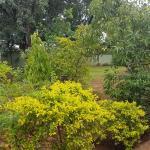 Njinji Guest House, Livingstone
