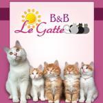 B&B Le Gatte, Prignano Cilento