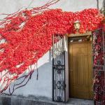 Edera Rossa,  Osmate Lentate