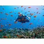 Nungwi Dive Centre, Utende