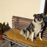 Hotel Pictures: Bohrerhof, Ahrnbach
