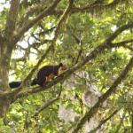 Rest In Nature Resort Wayanad, Vythiri
