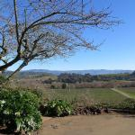 Vineyard Views at the KC House, Healdsburg