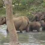Janaka Safari Homestay,  Tissamaharama