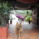 Hotel Pictures: Posada Guayacanes, Boquía