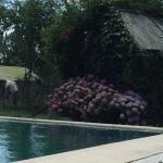 Hotellikuvia: Los 12 Robles, Batán
