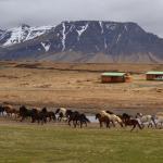 Snorrastadir Farm Holidays,  Rauðamelur