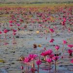 The Infinite Resort, Nakhon Sawan