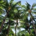 Washington Park Hotel South Beach, Miami Beach